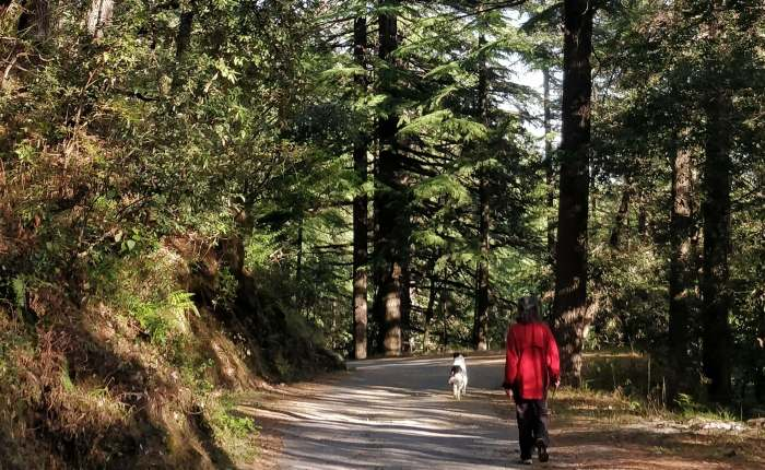 A walk in the clouds – UttarakhandWorkation